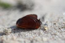 Klein aber fein...   am Strand von Simone Marsig