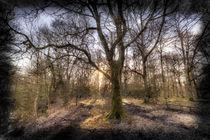 Early Morning Forest Art by David Pyatt