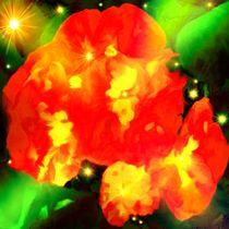 Die Rosen by tawin-qm