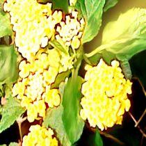 Die-gelbe