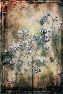 'VINTAGE GRASSES' by ursfoto