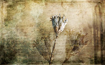 VINTAGE MEMORIES by ursfoto