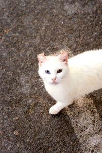 Spanish Cat 2 by Lucja Lipinska
