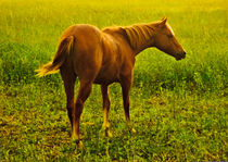 Brown Horse in the Meadow by Daniel Ferreira Leites Ciccarino