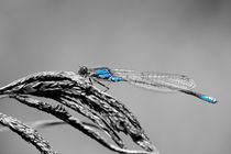 Blau von Stephan Gehrlein