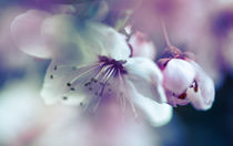 Blüte by Gabriele Brummer