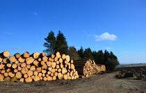 South Yorkshire Forestry by Malcolm Snook