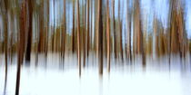 Winter-Wald-Panorama by gugigei