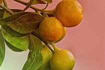 Mini-Zitrusfrüchte von Gisela Peter