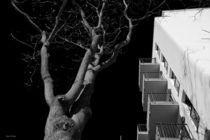 Night Tree by malin