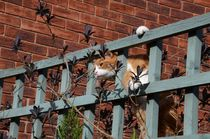 Cat On A Fence von Malcolm Snook
