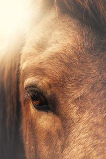 Equine eye von Marcus Hennen