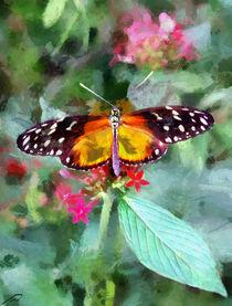 Butterfly-1319740-dap-pino