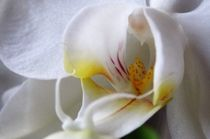 'Orchidee ' by Art of Irene S.
