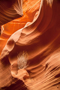 Rattlesnake Canyon by Martin Williams