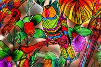 perruche du paradis by Boris Selke