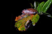 Farbigesblatt
