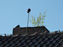 Natur auf dem Dach von isma