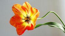 Frühlingsblume von Art of Irene S.