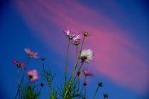 Flowers against the sky von Yuri Hope