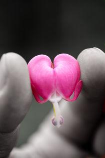 Herz zeigen von Stephan Gehrlein