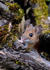 .. hier kommt die Maus .. by gugigei