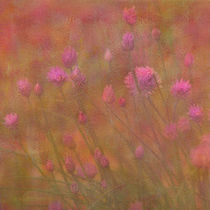 Melody-pink