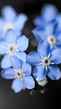 Blau in kleiner Blüte by Stephan Gehrlein