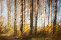 Birkenwaldwischer von hpengler