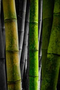 Bambus von Stephan Gehrlein