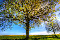 The Summer Farm Tree by David Pyatt