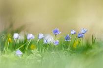 Auf der Blumenwiese von hpengler