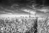 The Summer  English Field Infared by David Pyatt
