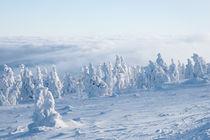 Winter von hpengler