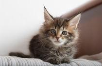 Dsc-0113-dot-mc-kitten11-02-16