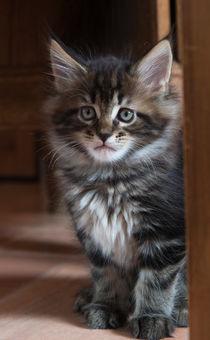Dsc-0070-dot-mc-kitten7-02-16