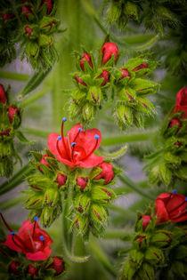 Frühlingserwachen von Gisela Peter