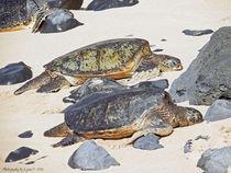 Sea Turtles von Gena Weiser