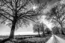The Summer Farm Track von David Pyatt