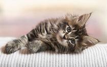 Dsc-0108-dot-mc-kitten10t-02-16
