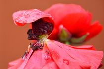 Regenschutz by gugigei