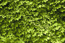 Green Wall von crazyneopop