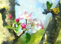 Apfelbluete-pino