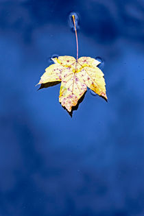 Herbst Blatt by Borg Enders