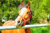 Horse-1374579-dap-pino