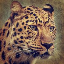 Leopard Portrait von AD DESIGN Photo + PhotoArt