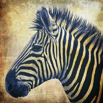 Zebra Portrait PopArt von AD DESIGN Photo + PhotoArt