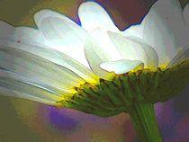 'jugendblüte' von hedy beith