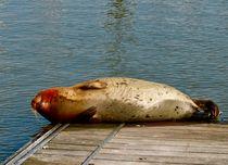 Seal by Adriana Diniz