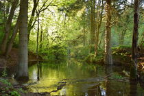 Fairytale Forest von milla